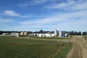 farming, farm, group, milk, solids, the Awamutu, Waikato, Canterbury, dairy, cows, family, Jamieson dairies ltd