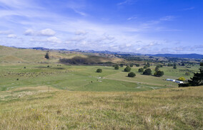 farming, farm, group, milk, solids, the Awamutu, Waikato, Canterbury, dairy, cows, family, piarere holdings ltd